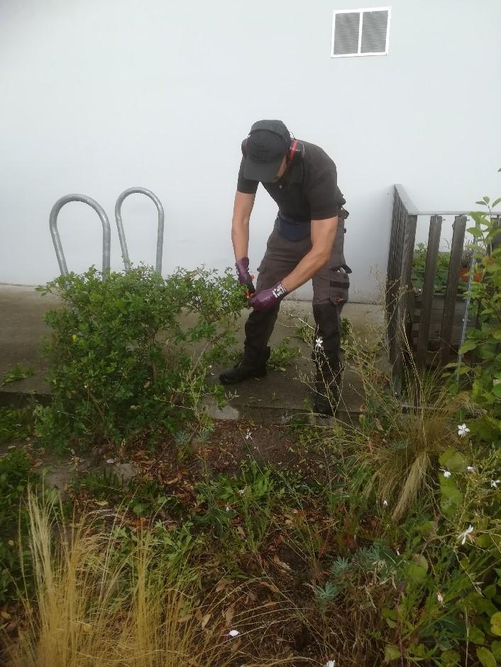 Un paysagiste Yanet s'occupe de la taille des arbustes.